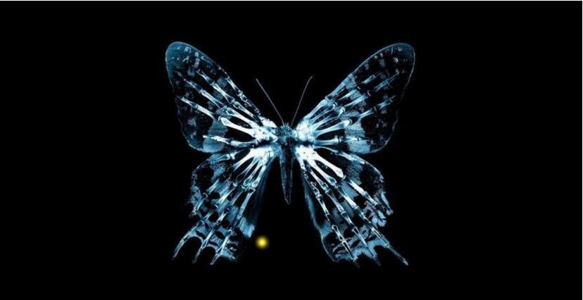 蝴蝶效应:牵一发而动全身,一个小的举动将会改变世界