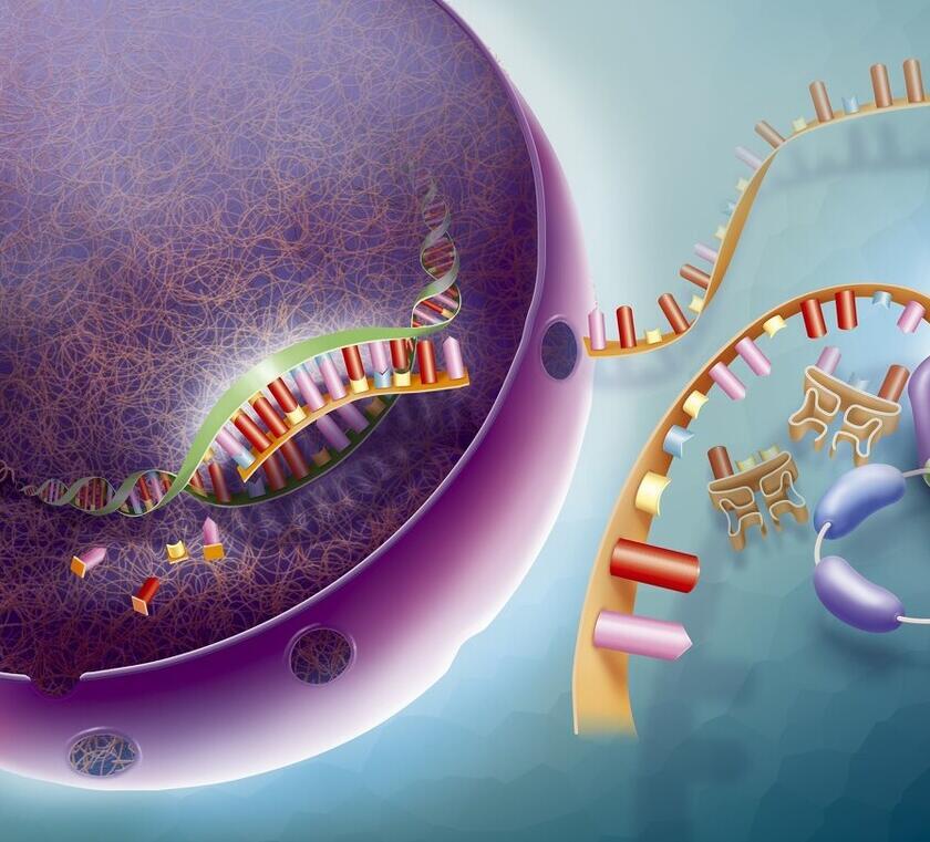 人类永生的秘密,长寿基因的手术刀,病毒